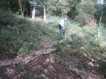 tidying-along-the-woodland-trail