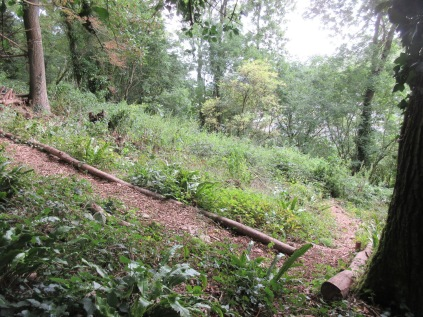 woodland trail tidied