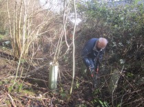 brambles-cut-and-tree-guards-removed
