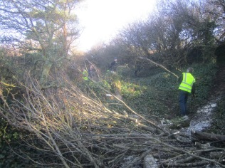 cut-branches-are-used-to-create-a-wildlife-habitat-pile