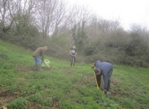 rooting out ragwort and thistles with ragforks