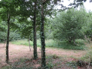 The Community Orchard's path and picnic area mown