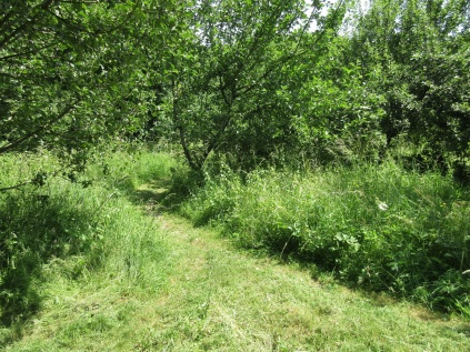 the main paths are mown throughout the summer