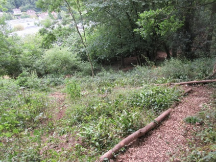 woodland trail tidied and sycamore shoots cut