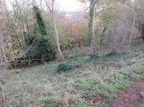 the same woodland glade, facing south