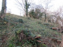 the woodland glade behind the Salthouse Flats