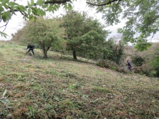 brushcutting and raking up to promote good grassland