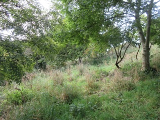 now clear of scrub, grasses and wild flower species reappear on this slope
