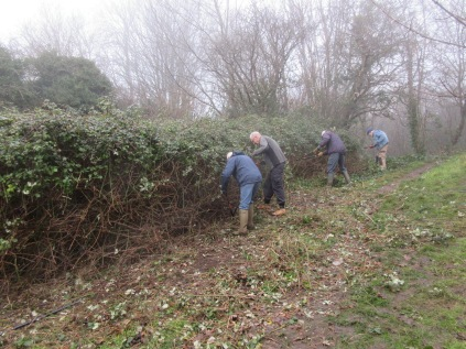 cutting back encroaching bramble next to a path