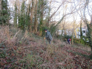 rooting out remaining brambles