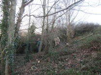 tree thinning allows more light to the glade