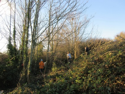tree thinning in late autumn sunshine