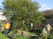 cutting brambles and the lowest holly branches
