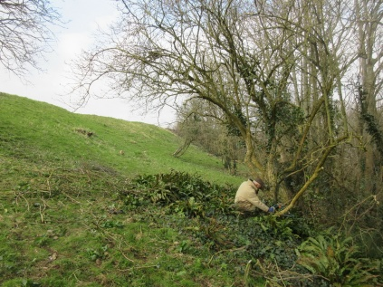 a remaining patch of scrub cleared and elder trimmed