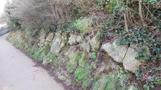 brambles and ivy cut back along the coast path