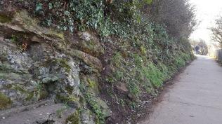 brambles etc. cut back along the coast path