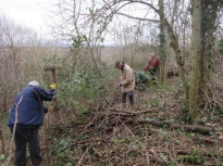 clearing bramble and brash