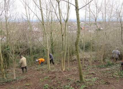 clearing bramble and cutting up brash
