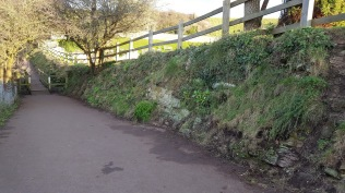 the badger bridge