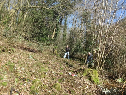 brambles cleared to allow light to the woodland floor