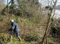 clearing a tangle of brambles