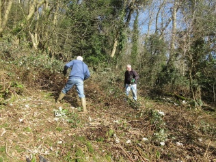 cutting back brambles