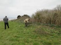 cutting back vigorous bramble shoots from the grassland