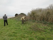 cutting back vigorous bramble shoots from the grassland