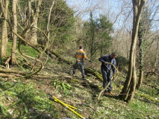 extending an informal trail by cutting sycamore saplings and clearing around fallen trees