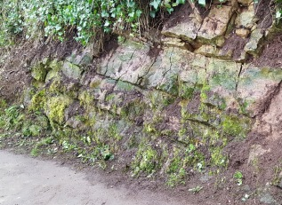 trailing ivy cut back to expose the rock face