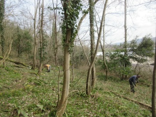 trimming back brambles along an earlier informal trail
