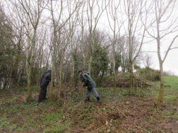 cleariing bramble prior to thinning ash trees