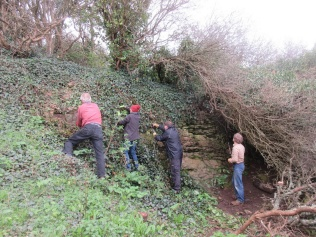 clearing ivy to expose the quarry face