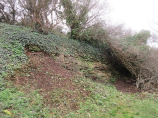 quarry face and slope partially cleared of ivy