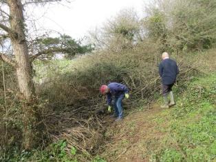 tidying scattered brash into habitat piles
