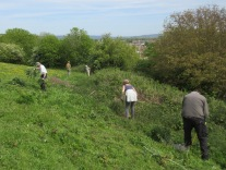 grubbing out bramble roots, wild radish, thistles and nettles