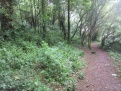 nettles forked out to allow other woodland species to flourish
