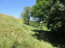 nettles and rank grass are scythed while an area of better grassland is left uncut
