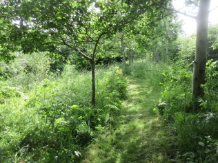 Quinney's Wood in mid June