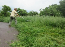 scything grassland to keep rank species under control
