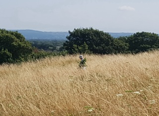 removing elder shoots from grassland