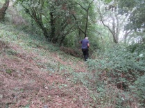 clearing old brambles to enlarge the glade