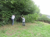 cutting back low hanging hazel to facilitate grass mowing