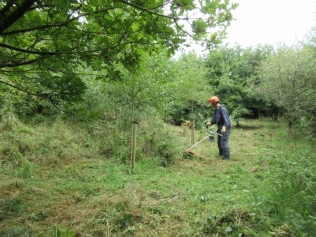 brush cutting long grass and blackthorn suckers