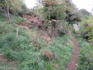 nettles pulled from Church Hill thicket area
