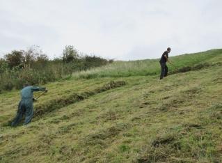 raking mown grass on Church Hill