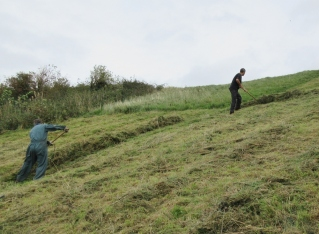 raking mown grass on Church Hill