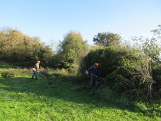 cutting back a thistly patch and vegetation bordering an old boundary wall