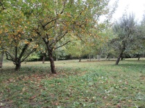 the orchard floor mown and raked