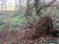 a habitat pile created from rotting grass